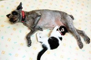 犬が猫に母乳を与える